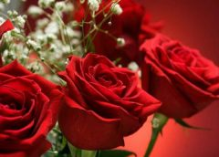 Sretan 8. Mart – Dan žena